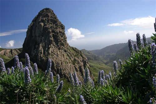 Garajonay National Park La Gomera - La Gomera car hire